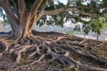 Connectwell Manifesto photo tree roots